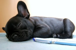 dog brushes for french bulldogs