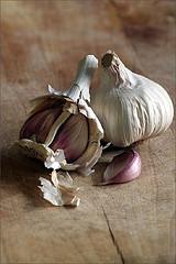 Garlic by Andrew Barrow on spitttoon.biz