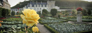 gardens at chateau de villandry