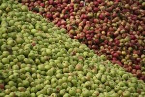 calvados_apples1