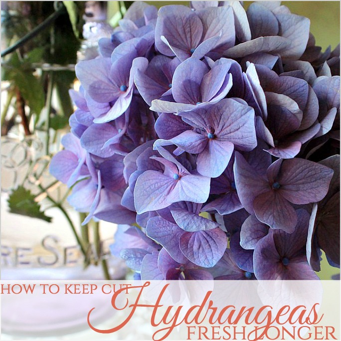 How To Keep Cut Hydrangeas Fresh Longer