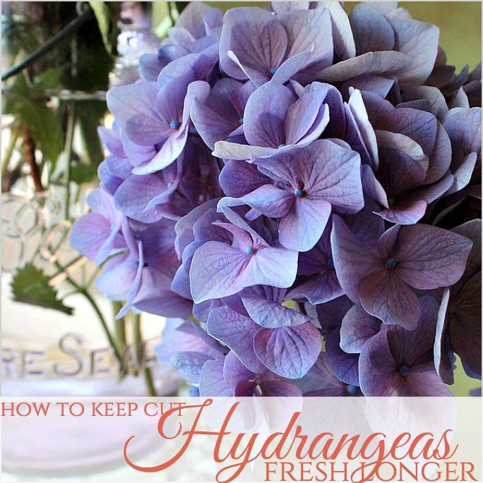 Hydrangeafghcut