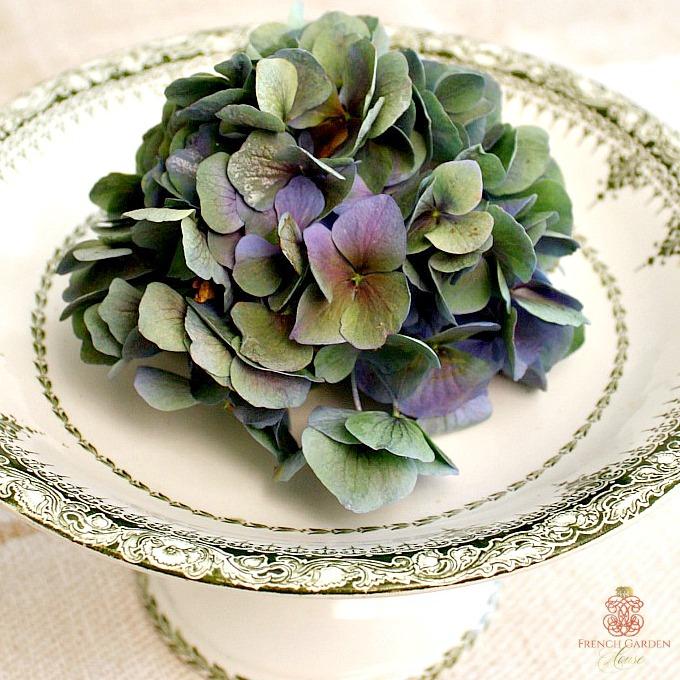 frenchgreenhydrangea