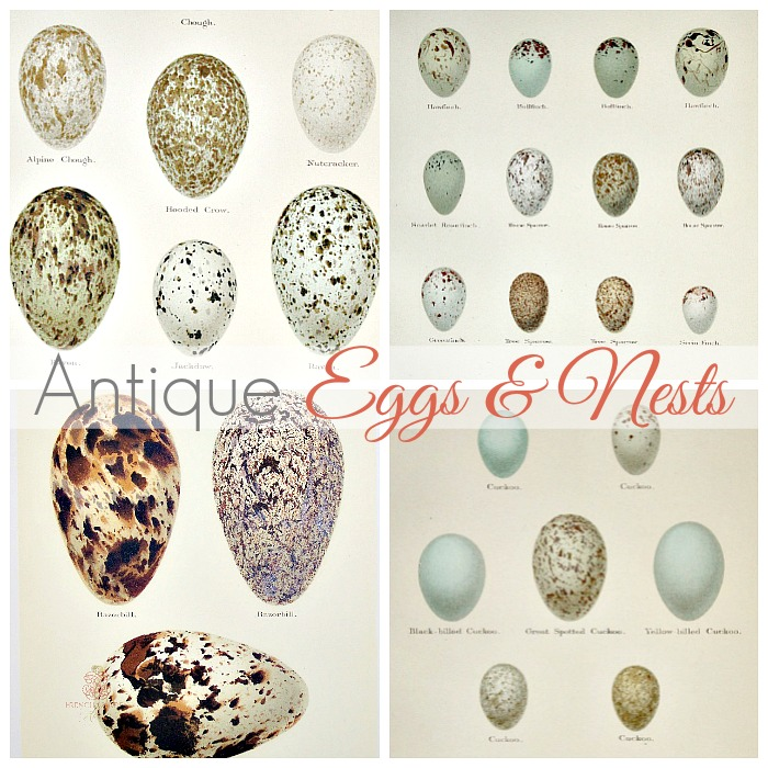 COLLECTING ANTIQUE NEST AND EGG PRINTS