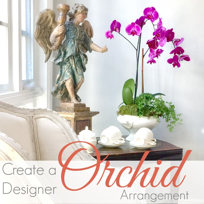 HOW TO | CREATE A DESIGNER ORCHID DISPLAY