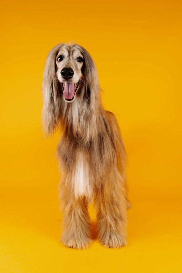 hemp oil dogs love