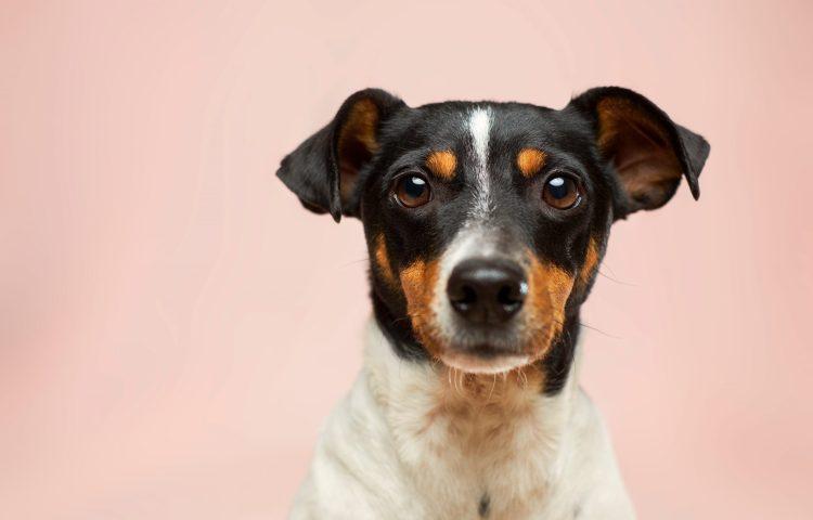 hemp oil guide for dogs