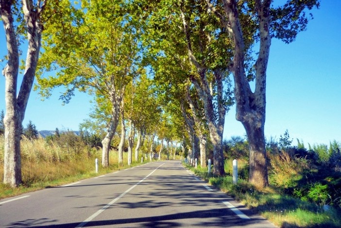 D99 road leading to Saint-Rémy-de-Provence © French Moments