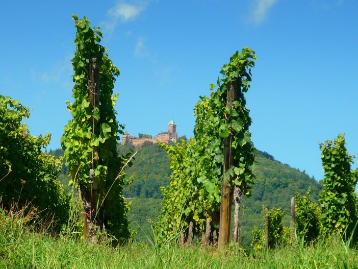 Alsace Wine Route - Haut-Kœnigsbourg © French Moments