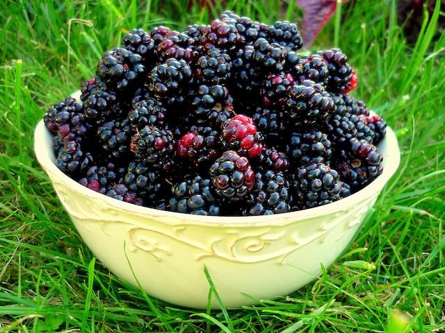 Blackberry Verrine © French Moments
