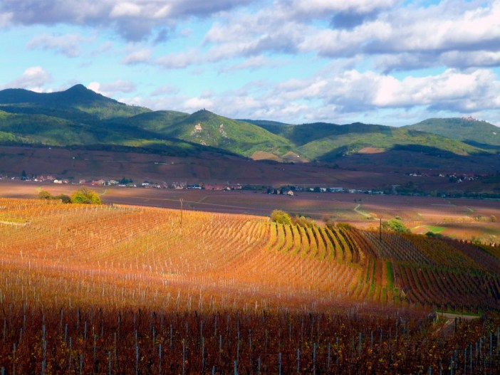 Vineyards of Alsace in Autumn © French Moments