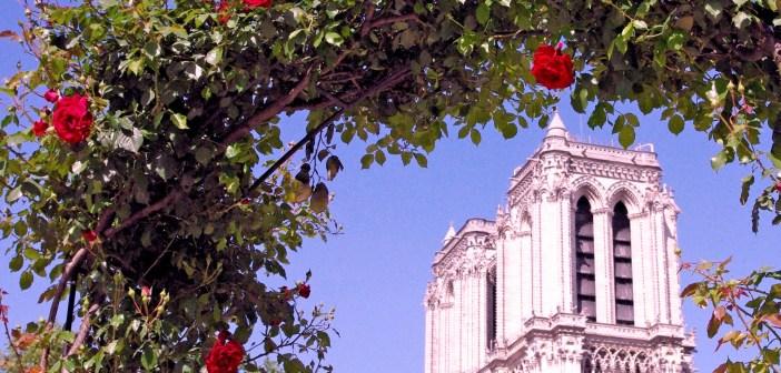 Paris en rose © French Moments