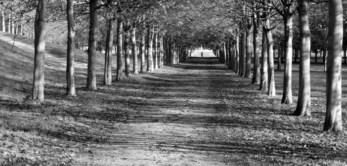 Parc de Saint Cloud NB 01 copyright French Moments