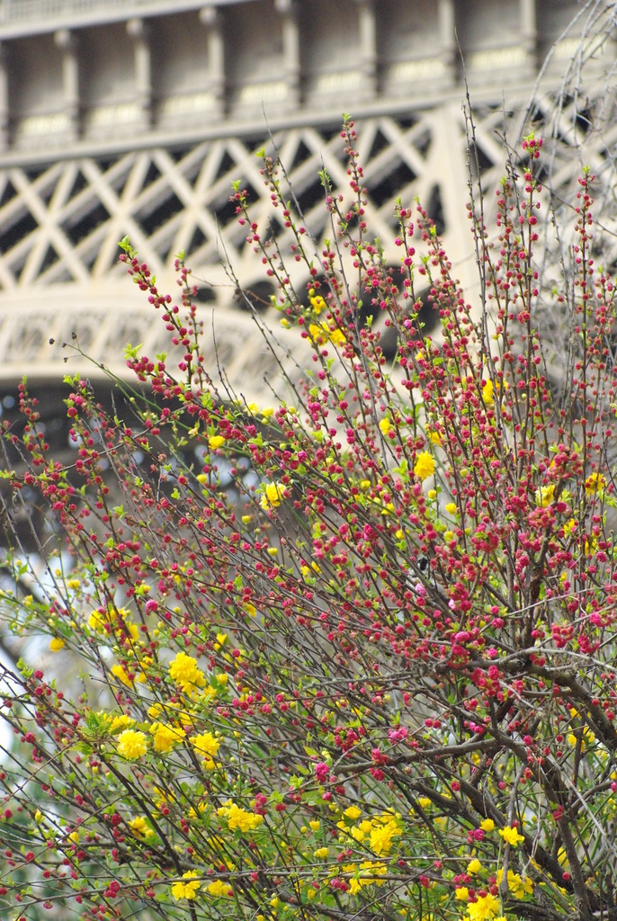 Spring at the Eiffel Tower 21 copyright French Moments