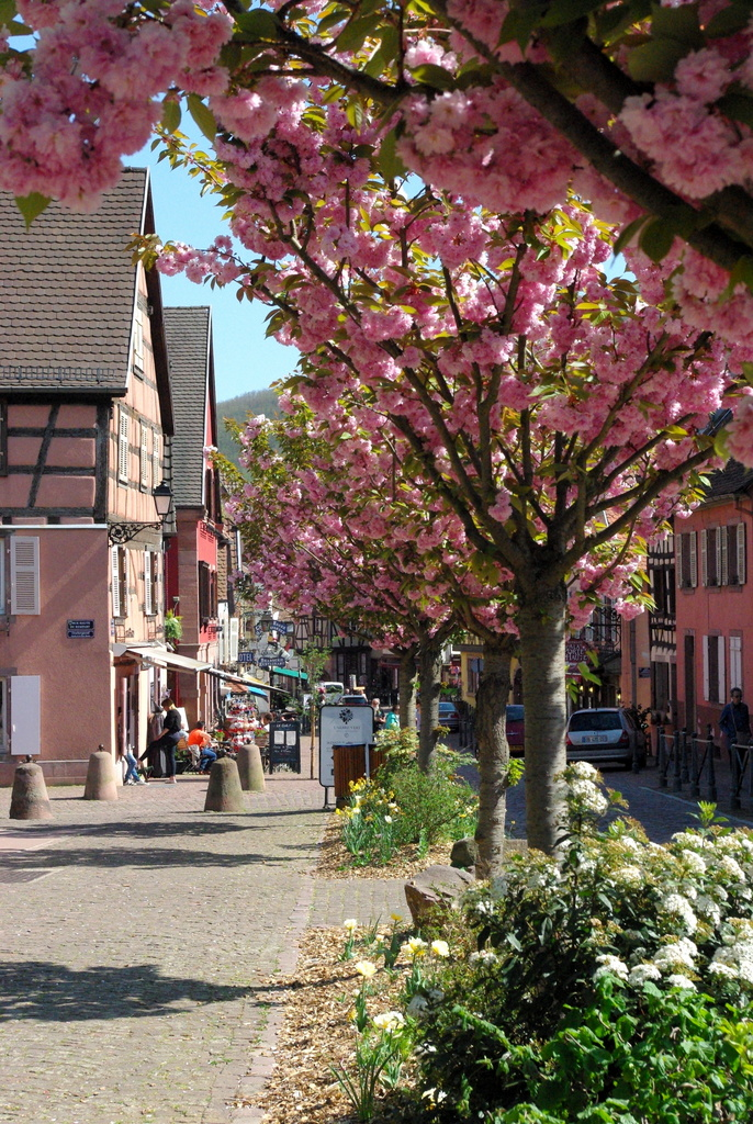 Kaysersberg Springtime 42 copyright French Moments