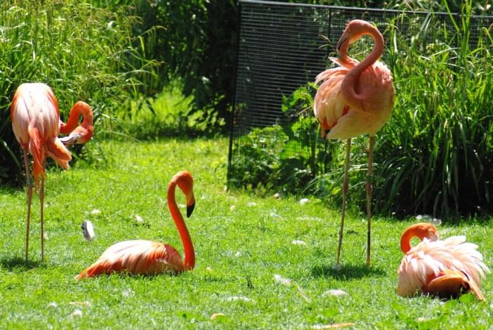 Ménagerie du Jardin des Plantes 14 copyright French Moments