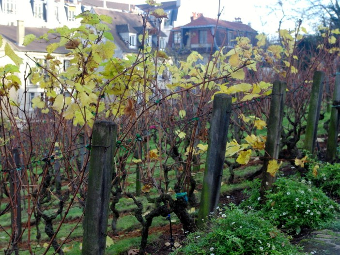 Vineyard of Montmartre in Autumn 01 © French Moments