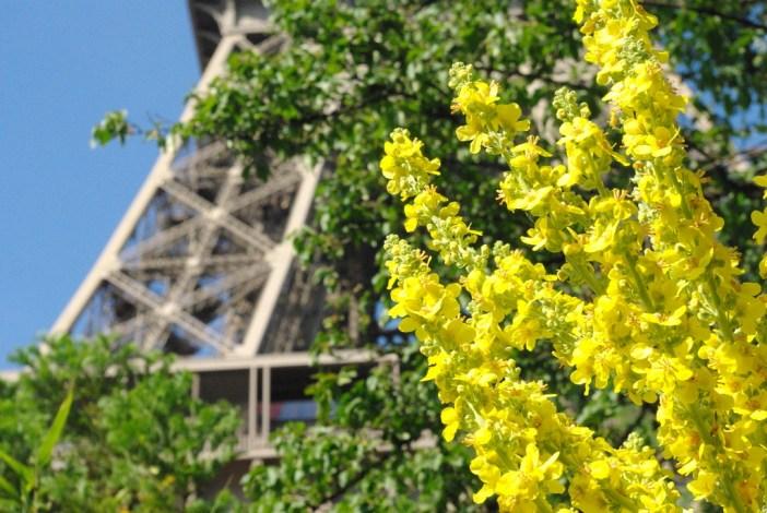 Champ de Mars Paris June 2015 27 © French Moments