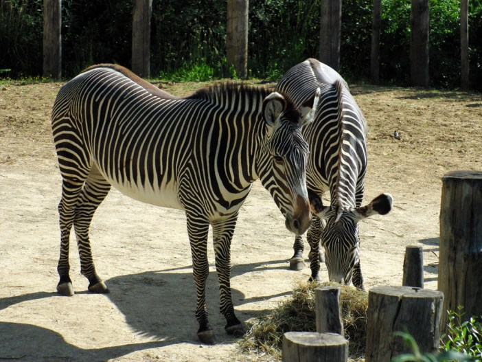 Paris Zoological Park © French Moments