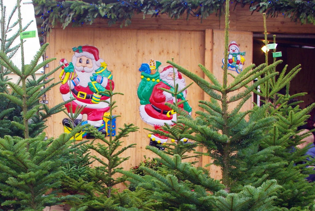 Facts and Figures about Christmas Trees in France - French Moments