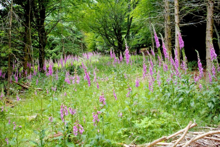 Photos of Spring in Alsace - Vosges © French Moments