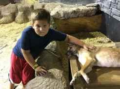 Touching Dingos
