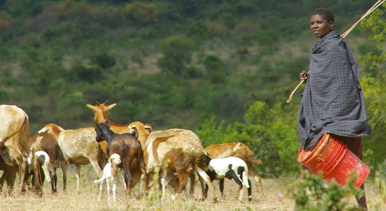 africa-shepherd