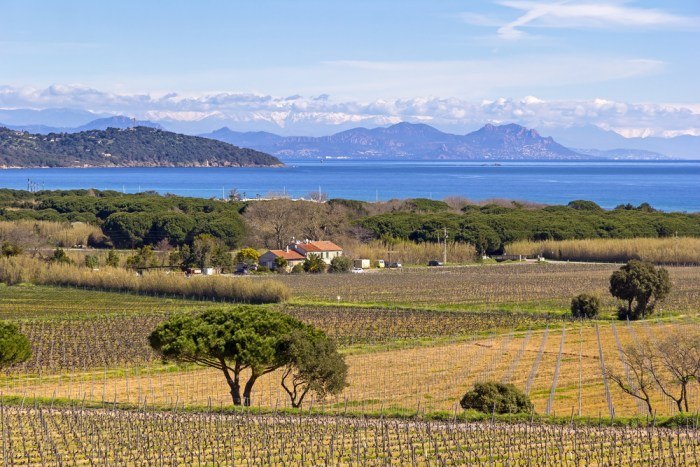Vineyards near St Tropez, France