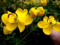 Garden District Botanicals: Great color & form