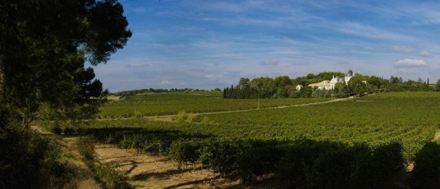 vines at Chateau Les Carrasses September 2017