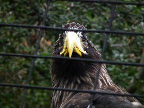 aige-zoo-san-diego