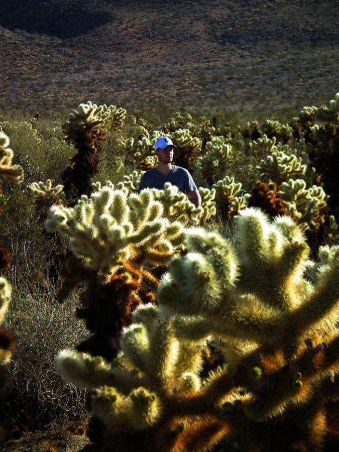 cactus-palm-springs