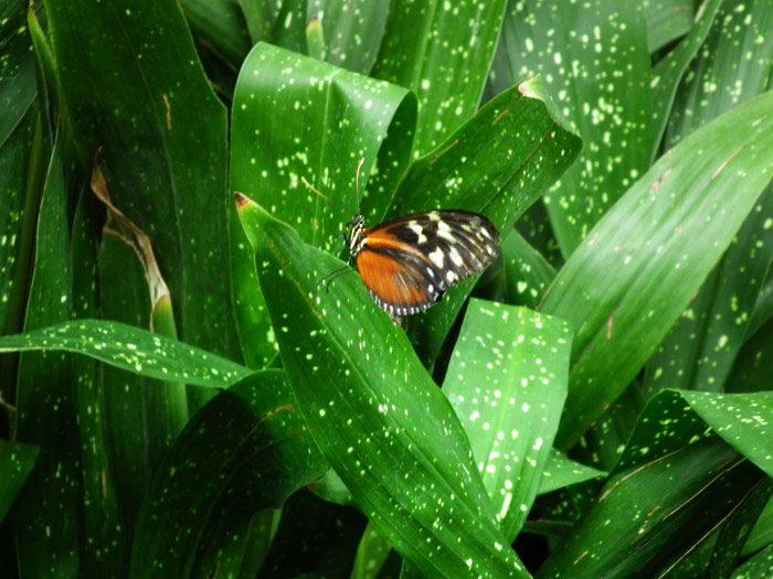 papillon-niagara-on-the-lake