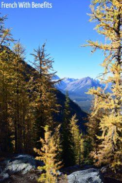 Arbres « jaunes » à la fin du trail Little Beehive