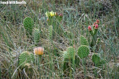 Il y a beaucoup de cactus dans ce parc