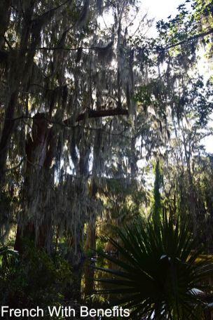 Magnolia-Plantation2