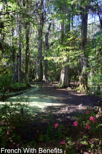 Magnolia-Plantation3