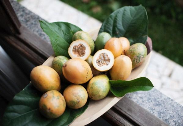 Pour une bonne moisson, il faut avoir les meilleures semences. Comment les sélectionner ?