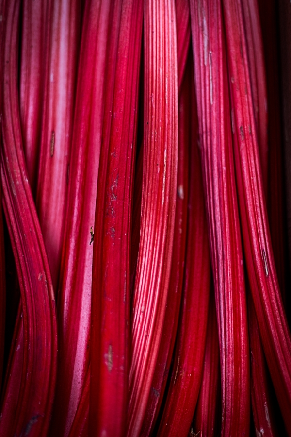 Optimized-rhubarb-839618