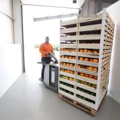 Fresh oranges being shipped into the truck