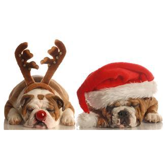 12 days of Christmas Alternative Health Song