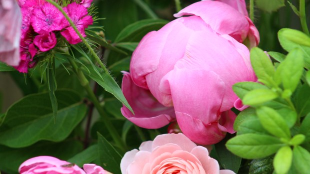 pink_arrangement 058