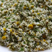Growing Chamomile from Seed: Gardening for Beginners - Growing Flowers from Seed - Cut Flower Farm
