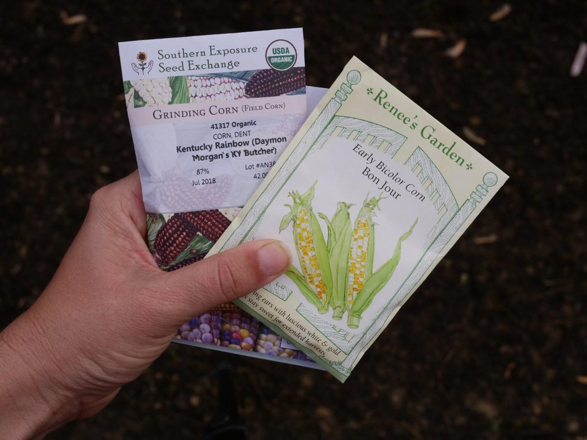 Planting Corn: Sweet Corn, Popcorn, and Dent