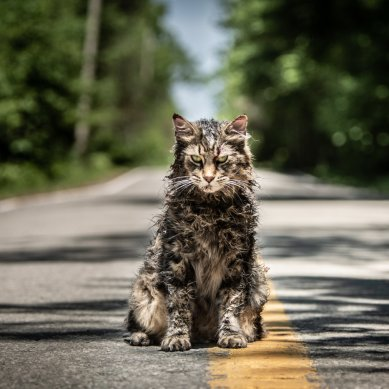 Fresh on Blu-ray: 'PET SEMATARY' brings special features back from the dead