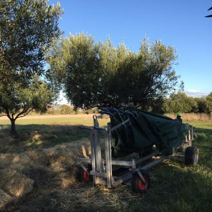 freshfield grove olive harvest 2017 net