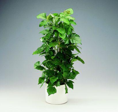 Plante Dintrieur Super Dco Et Facile Dentretien La