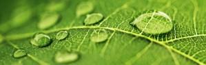 Elizabeth Newton Fresh Leaf Hypnotherapy