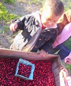 Child looking at Cranberry crate at Fresh Meadows Farm in Carver, MA.
