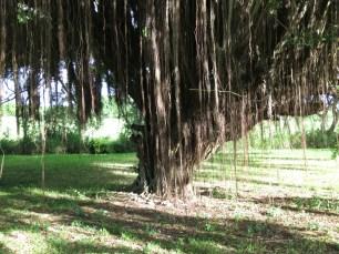 Tree in the backyard